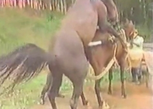 Massive horses are having a perfect bestial action