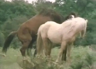 Stunning horses having passionate bestiality XXX